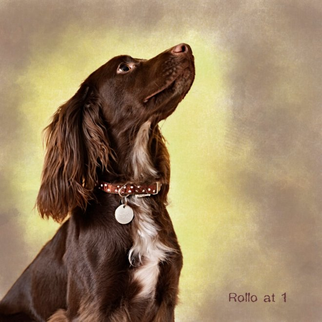 Rollo at 1 portrait webres